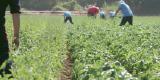 キングラン農業,アグリ